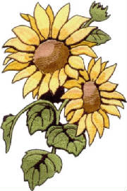 sunflowergraphic.jpg